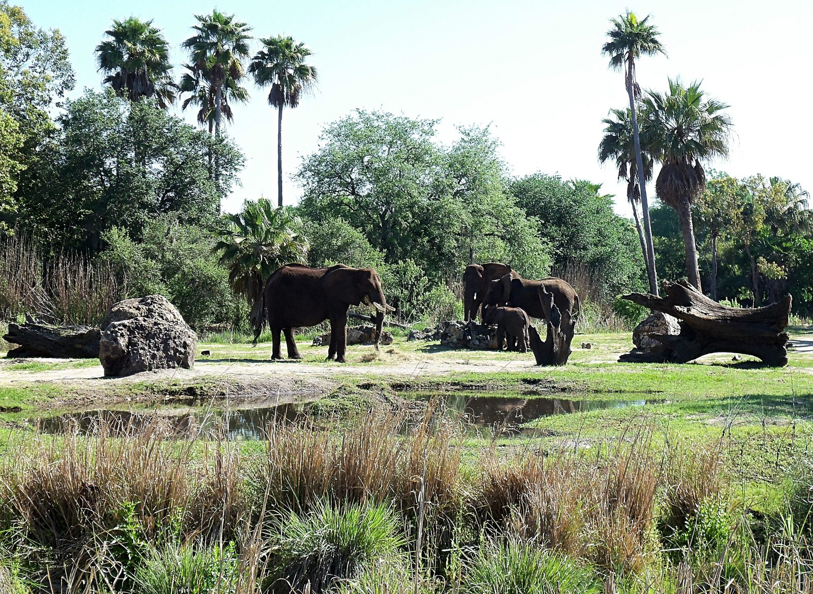 elephants at kilimanjaro safari