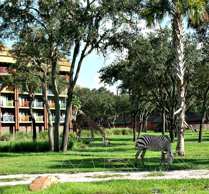 Rent DVC Points & Save Up To 70%