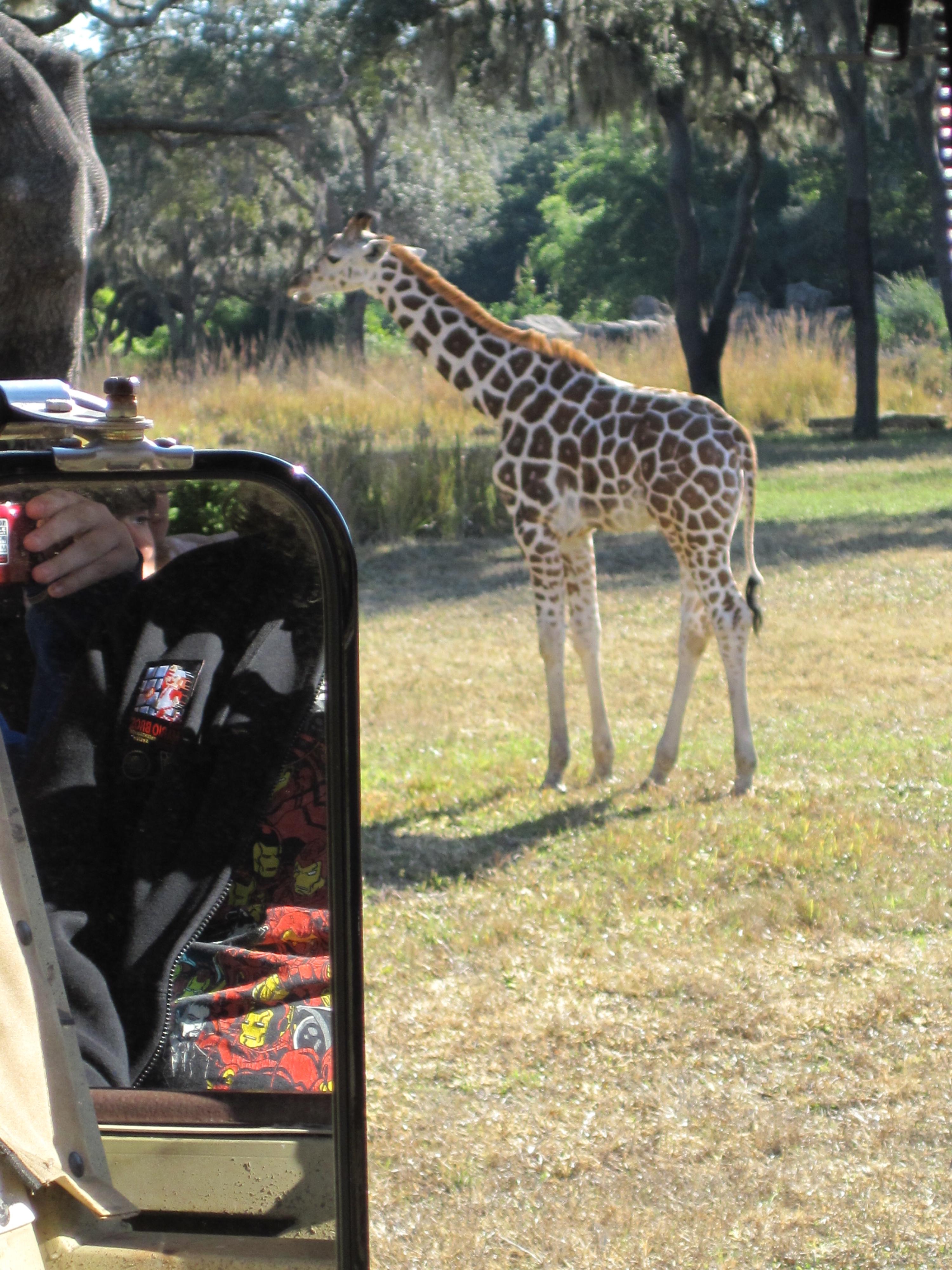 giraffe on kilimanjaro safaris - fastpass tiers recommendation