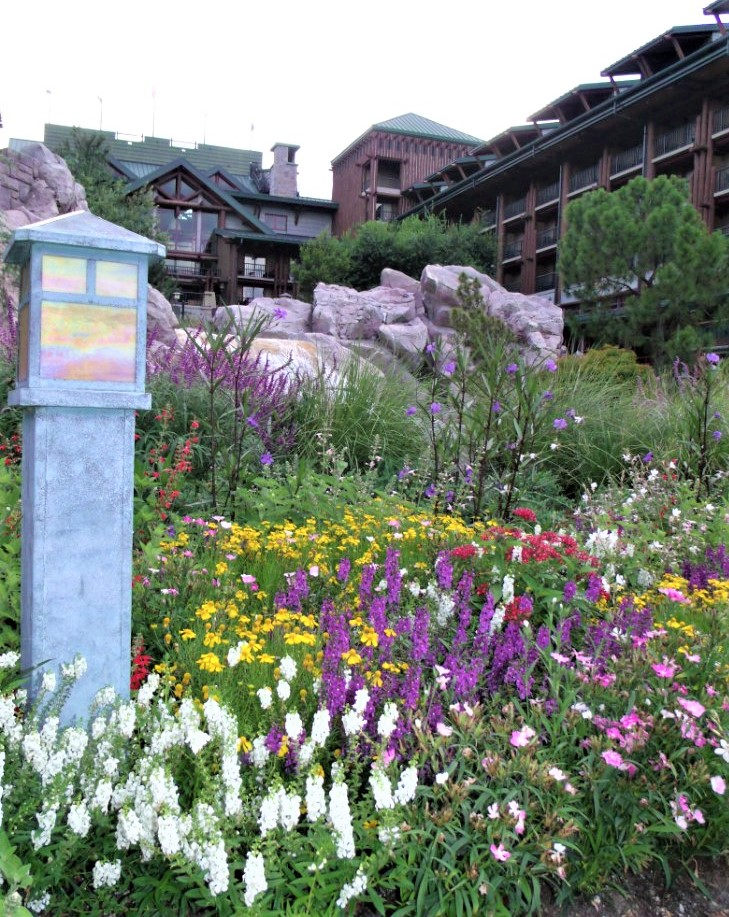flowers blooming outside a disney resort